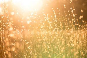 sun-control-film